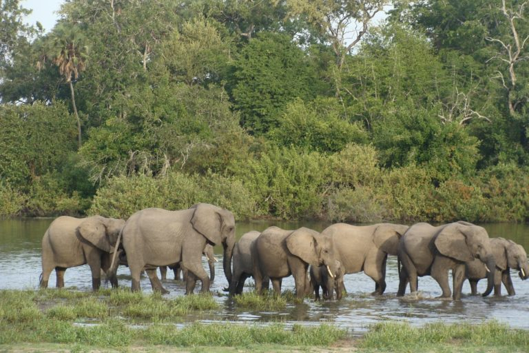 Selous-Game-Reserve