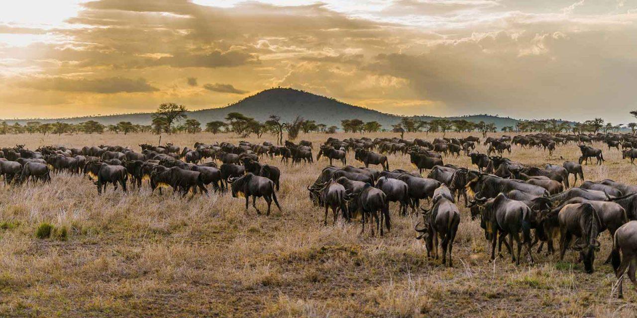 Tanzania Lodge Safari 5 Days