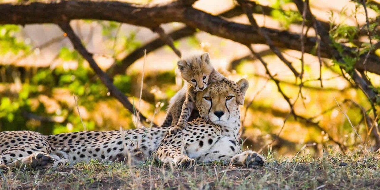 Camping Safari – 4 Days
