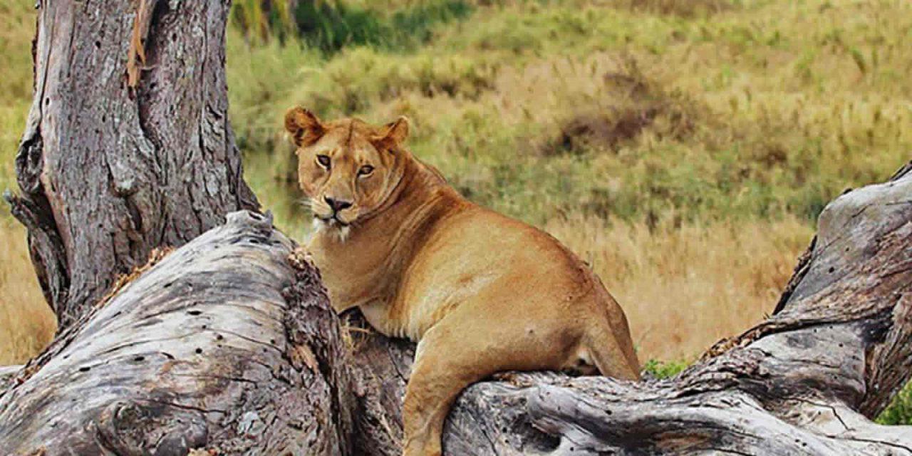 Tanzania Lodge Safari – 4 Days