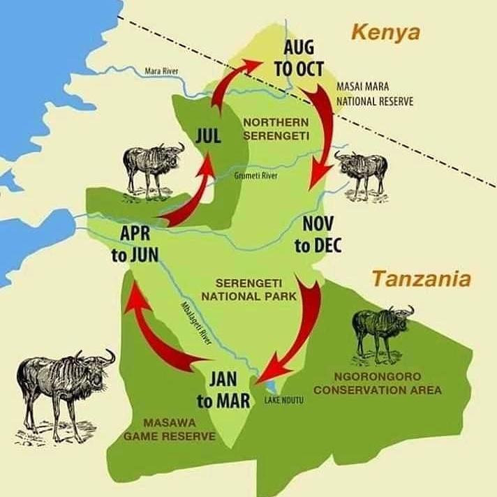 https://kili-bomaadventures.com/wp-content/uploads/2021/05/wildebeest_map.jpg